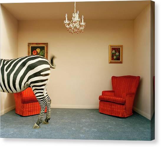 Zebra In Living Room Swishing Tail by Matthias Clamer