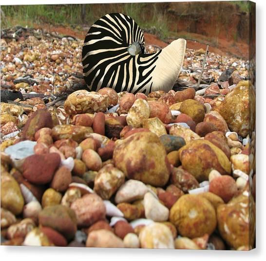 Zebra Nautilus Shell On Bauxite Beach Canvas Print