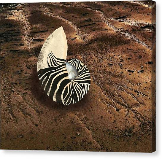 Zebra Nautilus Shell On The Sand Canvas Print