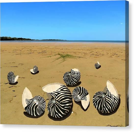 Zebra Nautilus Shells On The Beach  Canvas Print