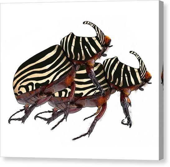 Zebra Pattern Rhinoceros Beetle 2 Canvas Print