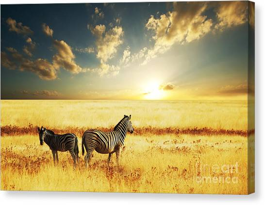 Bush Canvas Print - Zebras At Sunset by Galyna Andrushko