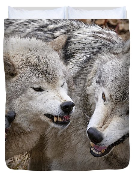 Duvet Cover featuring the photograph  Alpha Displeasure 2 by Wolves Only