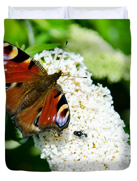 Peacock Butterfly Duvet Cover by Martina Fagan