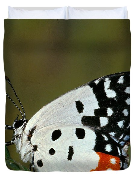 Red Pierrot Butterfly Duvet Cover by Anonymous