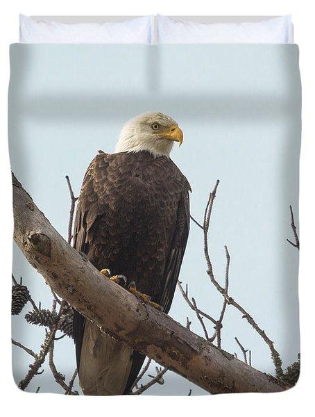 Resting Bald Eagle Duvet Cover