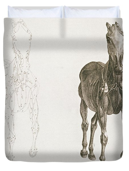 Tab Viii From The Anatomy Of The Horse Duvet Cover