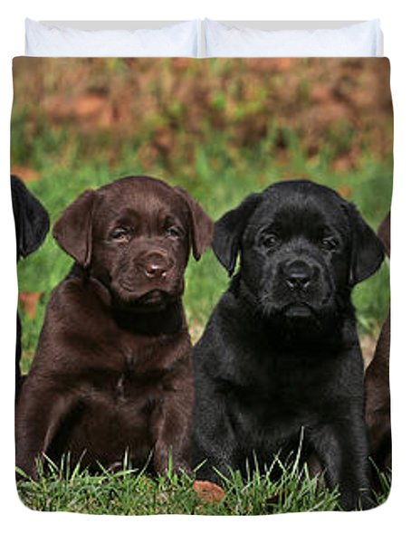 8 Labrador Retriever Puppies Brown And Black Side By Side Duvet Cover by Dog Photos