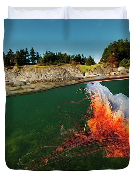 A Lions Mane Jellyfish Drifts In Bonne Duvet Cover