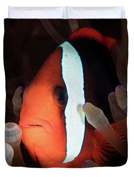A Red And Black Anemonefish Swims Among Duvet Cover