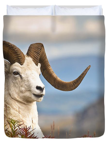 Adult Dall Sheep Ram Resting Duvet Cover by Michael Jones