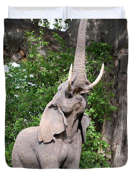African Elephant Loxodonta Africana Duvet Cover