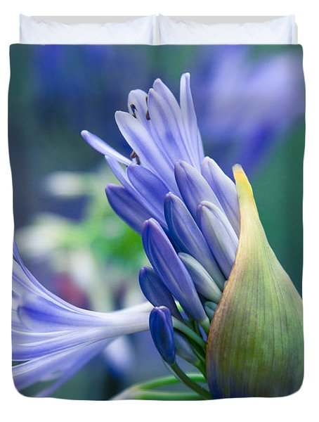 Agapanthus Orientalis - Lily Of The Nile Duvet Cover