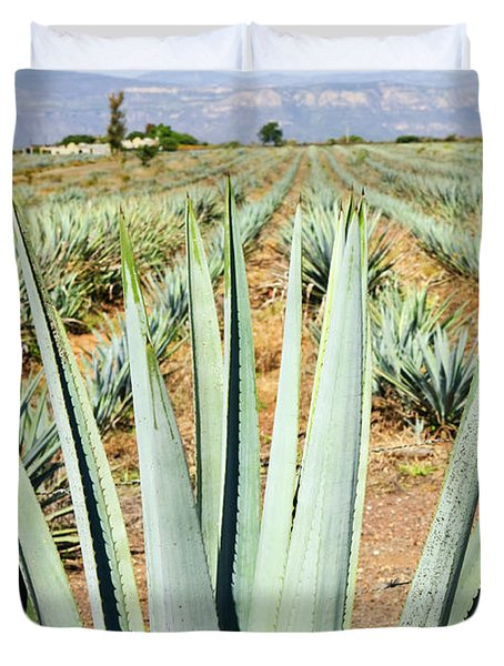 Agave Cactus Field In Mexico Duvet Cover by Elena Elisseeva