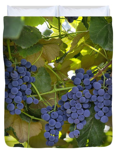 Agriculture - Concord Tablejuice Grapes Duvet Cover by Gary Holscher