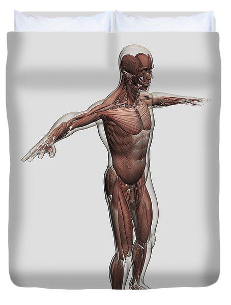 Anatomy Of Male Muscular System, Side Duvet Cover by Stocktrek Images