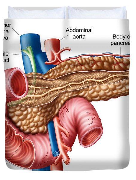 Anatomy Of Pancreas Duvet Cover