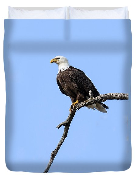 Bald Eagle 6 Duvet Cover