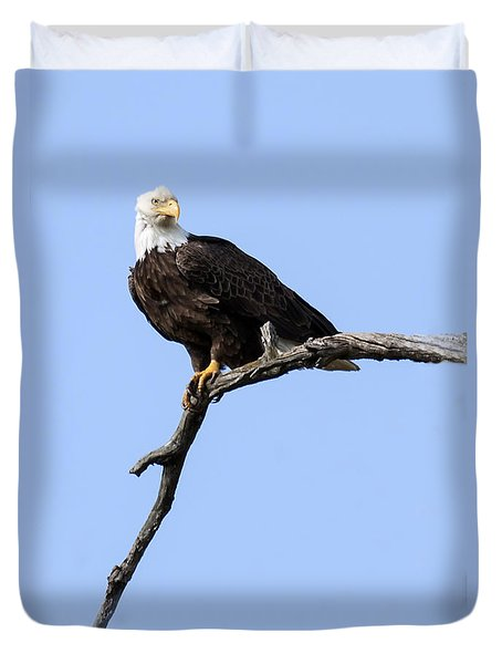 Bald Eagle 7 Duvet Cover