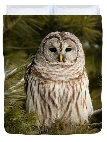 Barred Owl In A Pine Tree. Duvet Cover by Michel Soucy