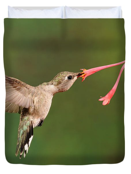 Black-chinned Hummingbird Duvet Cover by Scott Linstead
