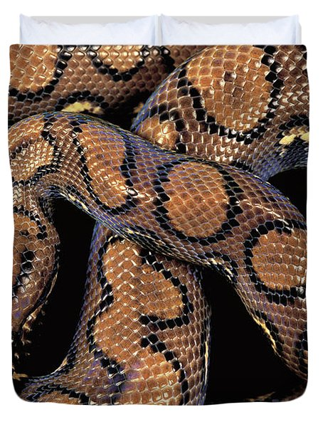Brazilian Rainbow Boa Duvet Cover by Art Wolfe