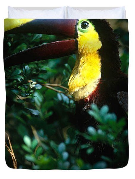 Chestnut-mandibled Toucan Duvet Cover by Art Wolfe