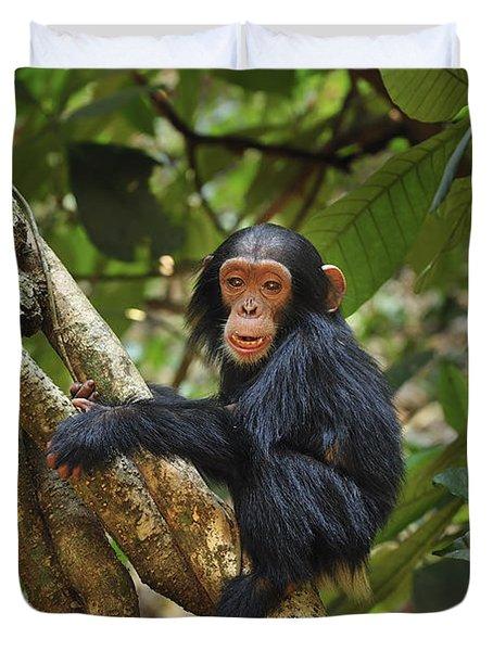 Chimpanzee Baby On Liana Gombe Stream Duvet Cover by Thomas Marent