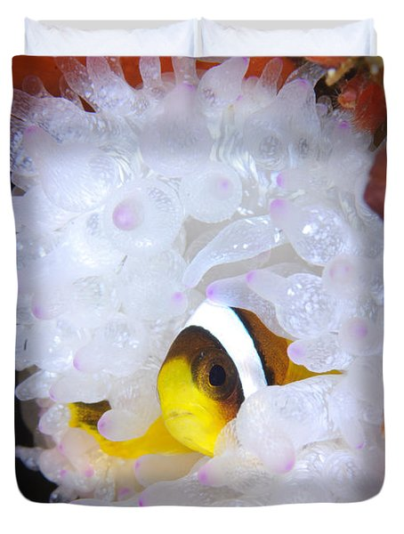 Clarks Anemonefish In White Anemone Duvet Cover by Steve Jones