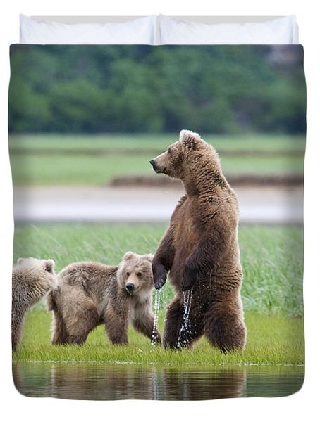 Coastal Brown Bear Sow With Her Two Duvet Cover