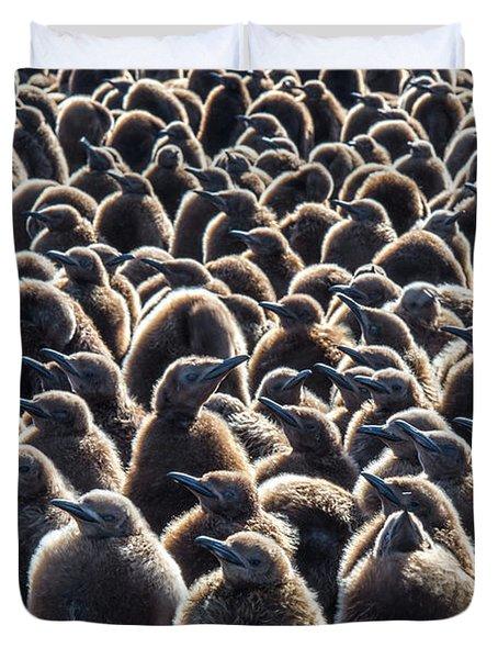 Colony Of King Penguins, Aptenodytes Duvet Cover