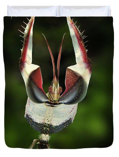 Devils Praying Mantis In Defensive Duvet Cover