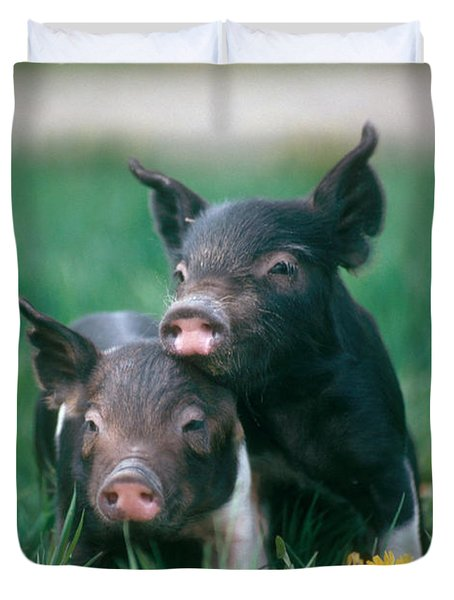 Domestic Piglets Duvet Cover by Alan Carey