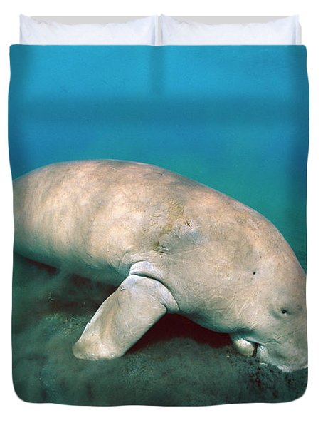 Dugong  Feeding On Sea Grass Duvet Cover by Mike Parry