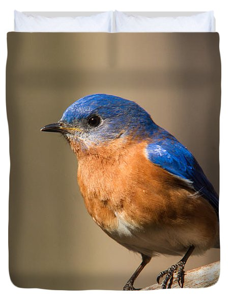 Eastern Bluebird Male 7 Duvet Cover by Douglas Barnett