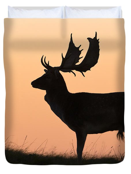 Fallow Deer Buck At Sunset Denmark Duvet Cover by Duncan Usher