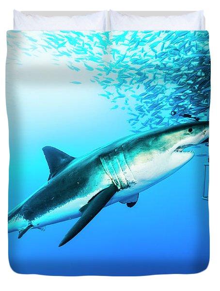 Female Great White Shark, Carcharodon Duvet Cover