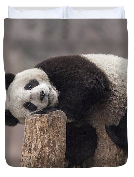 Giant Panda Cub Wolong National Nature Duvet Cover
