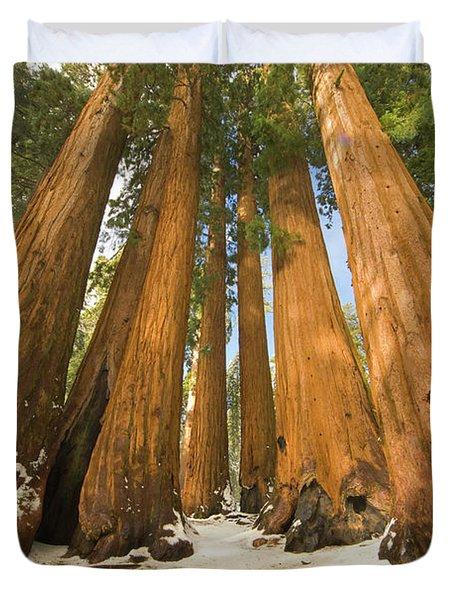 Giant Sequoias Sequoia N P Duvet Cover