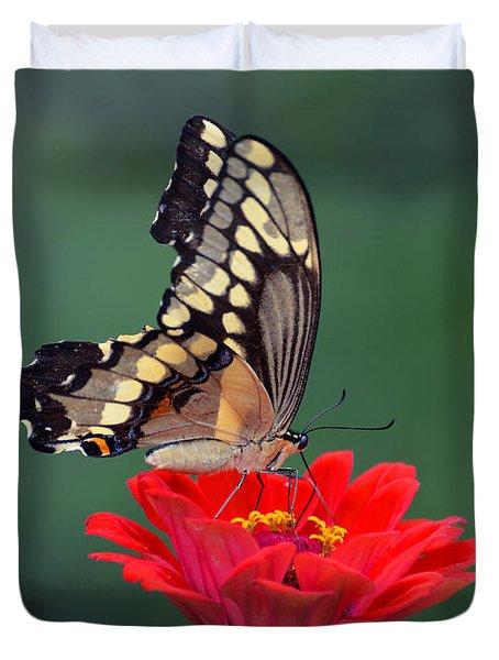 Giant Swallowtail Duvet Cover