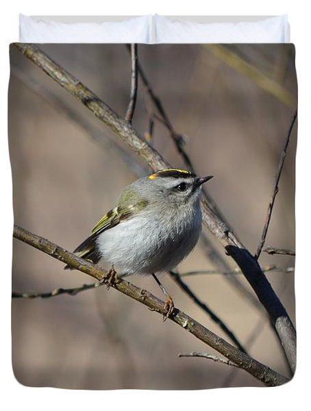 Golden-crowned Kinglet Duvet Cover