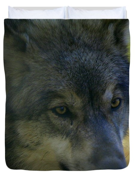 Gray Wolf Duvet Cover by Neal Eslinger