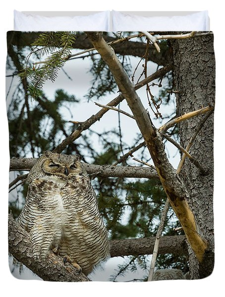 Great Horned Owls Duvet Cover