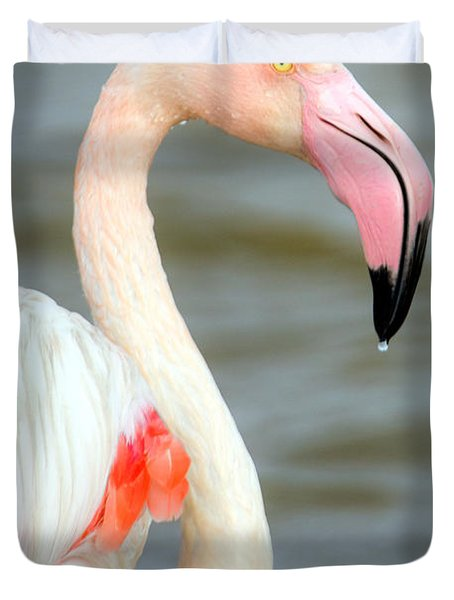 Greater Flamingo Phoenicopterus Roseus Duvet Cover