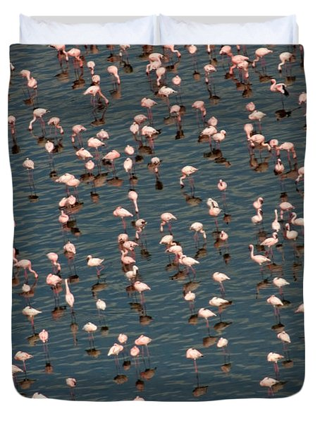 Lesser Flamingo, Lake Nakuru, Kenya Duvet Cover