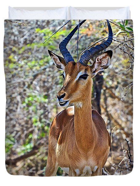Male Impala In Kruger National Park-south Africa   Duvet Cover