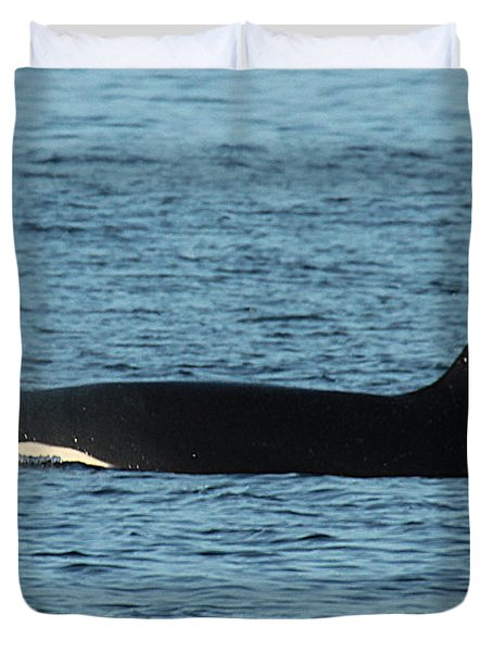 Duvet Cover featuring the photograph Male Orca Killer Whale In Monterey Bay California 2013 by California Views Mr Pat Hathaway Archives