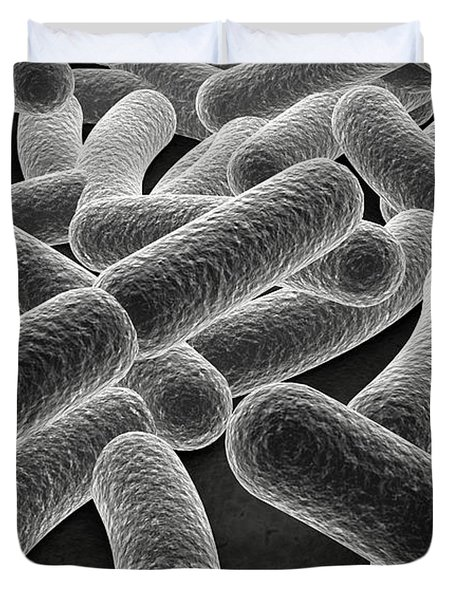 Microscopic View Of Bacilli Bacteria Duvet Cover by Stocktrek Images
