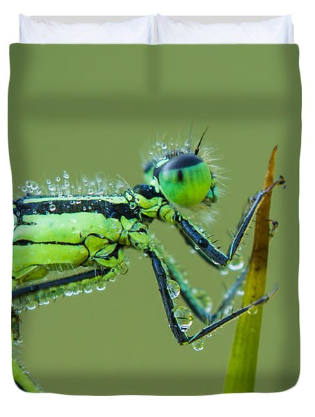 Morning Damselfly Duvet Cover by Mircea Costina Photography