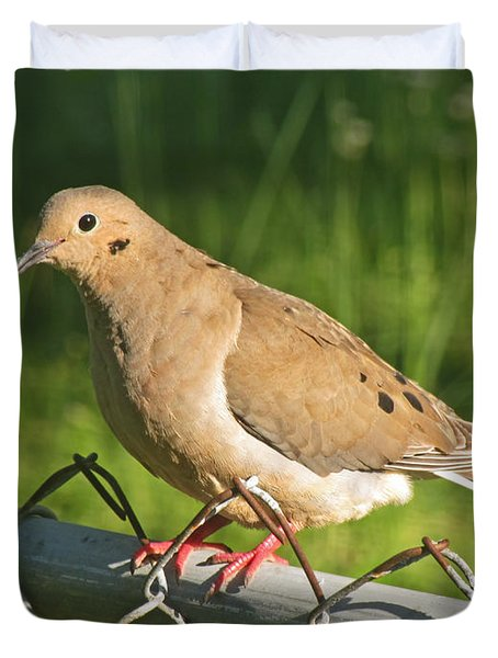 Morning Dove I Duvet Cover